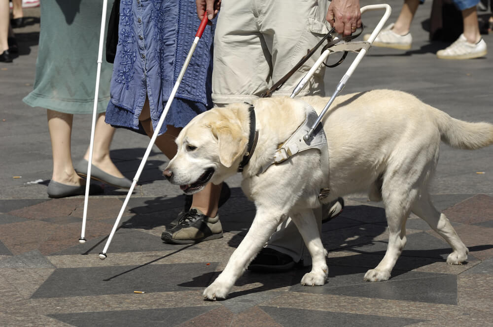 blind-person-with-guide-dog